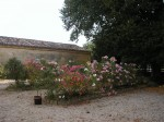 Les Lauriers roses.JPG